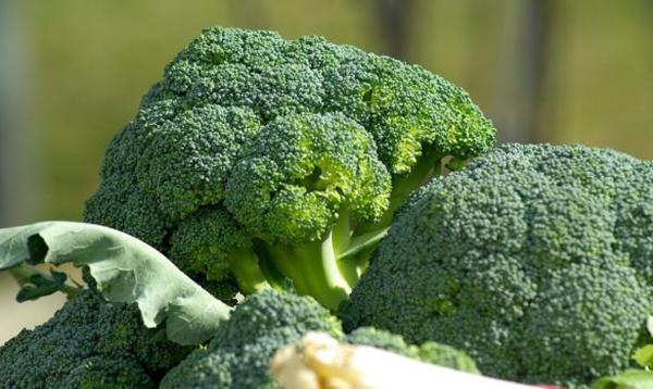 Sup-lo-xanh-giau-vitamin